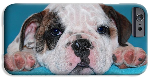 Puppies iPhone Cases - Bulldog Puppy Face iPhone Case by Pattie Calfy