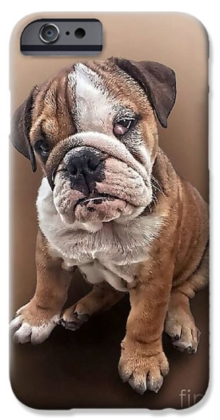 Puppy Digital Art iPhone Cases - Bulldog Puppy Portrait 002 iPhone Case by Digital Pet Portraits UK