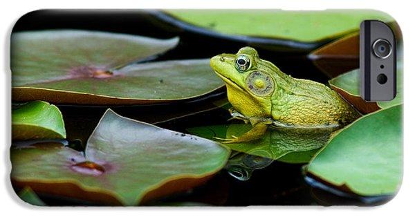 Amphibians iPhone Cases - Bullfrog iPhone Case by Jim Zipp