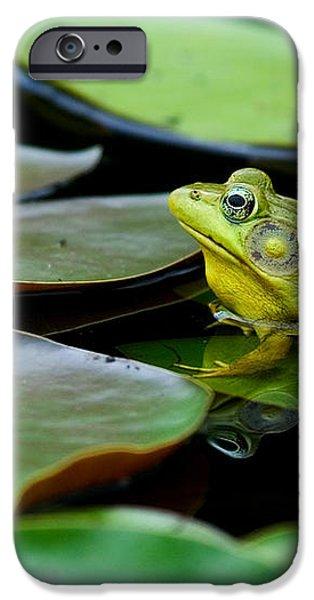 Bullfrog iPhone Case by Jim Zipp