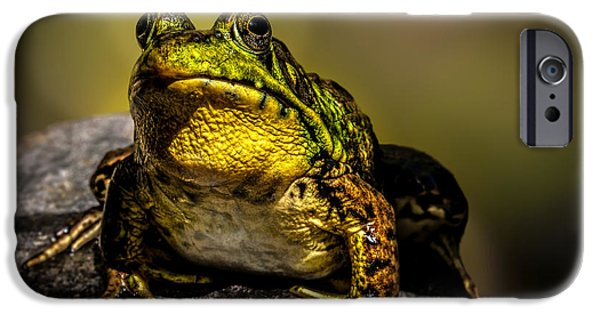 Amphibians Photographs iPhone Cases - Bullfrog Watching iPhone Case by Bob Orsillo