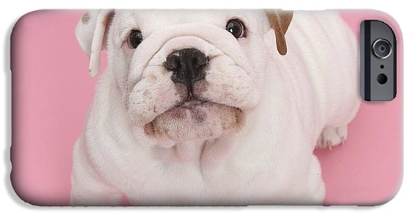 Cute Puppy iPhone Cases - Bullldog Puppy iPhone Case by Mark Taylor