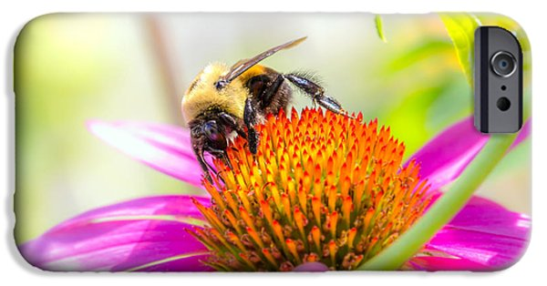Cone Flower iPhone Cases - Bumble Bee iPhone Case by Bob Orsillo