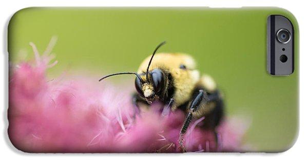 D.c. iPhone Cases - Bumble Bee iPhone Case by Dustin  LeFevre