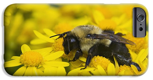 Indiana Springs iPhone Cases - Bumblebee - D008456 iPhone Case by Daniel Dempster