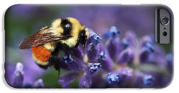 Lavender iPhone Cases - Bumblebee on Lavender iPhone Case by Rona Black