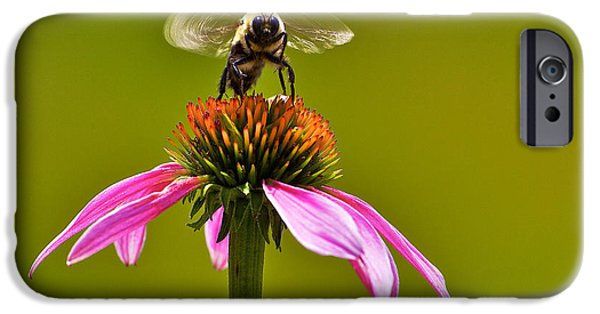 Flower Bombs iPhone Cases - Bumblebee on Take Off iPhone Case by Julie Chen