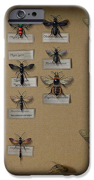 Bumblebees - wild bees - wesps - yellow jackets - ichneumon flies - apiformes vespulas hymenopteras  iPhone Case by Urft Valley Art