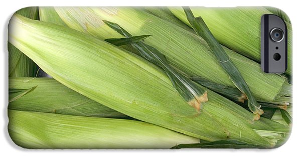 Sweet Corn Farm iPhone Cases - Bunch of corn in husk iPhone Case by James BO  Insogna