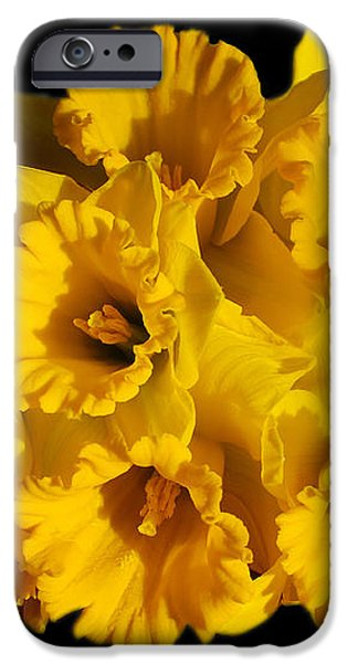 Bunch of Daffodils iPhone Case by JM Braat Photography