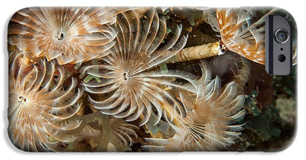Plankton iPhone Cases - Bunch of dusters iPhone Case by Jean Noren