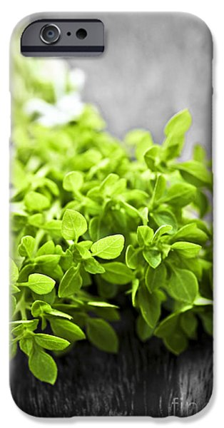 Thread iPhone Cases - Bunch of fresh oregano iPhone Case by Elena Elisseeva