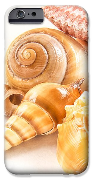 Bunch of Shells iPhone Case by Jean Noren