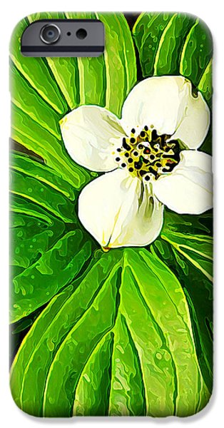 Floral Digital Art Digital Art iPhone Cases - Bunchberry Blossom iPhone Case by Bill Caldwell -        ABeautifulSky Photography