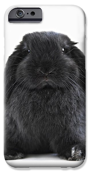 Bunny rabbit iPhone Case by Elena Elisseeva