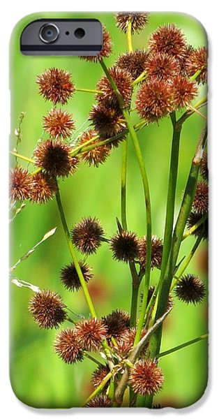 Floral Photographs iPhone Cases - Bur-reed iPhone Case by Zina Stromberg