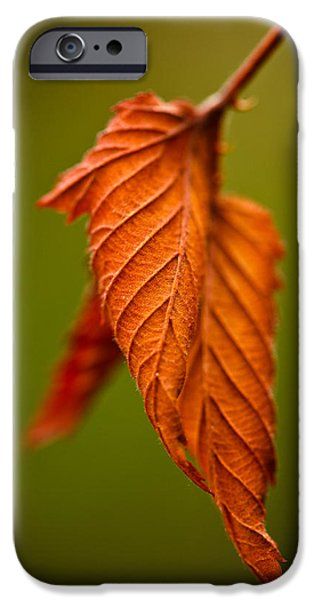 Leaves iPhone Cases - Burn iPhone Case by Shane Holsclaw