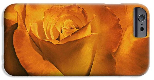 Gold Rose iPhone Cases - Burnt Gold Rose Flower iPhone Case by Jennie Marie Schell