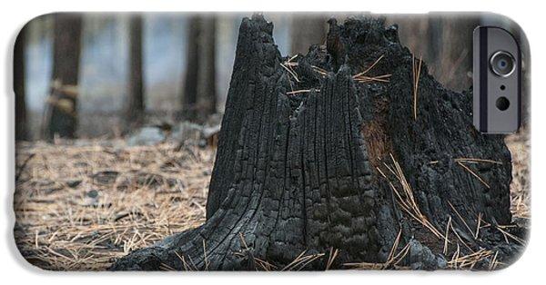 Destruction iPhone Cases - Burnt Tree Trunk iPhone Case by Juli Scalzi