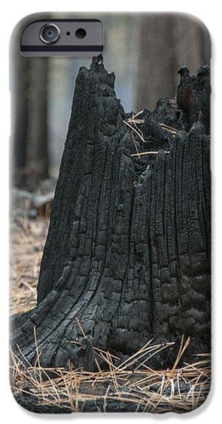 Burnt Tree Trunk iPhone Case by Juli Scalzi