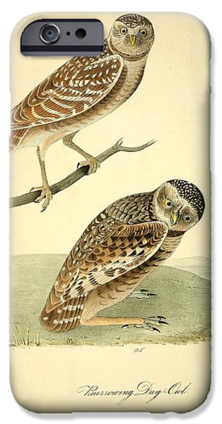 Botanical Drawings iPhone Cases - Burrowing Day Owl iPhone Case by John James Audubon