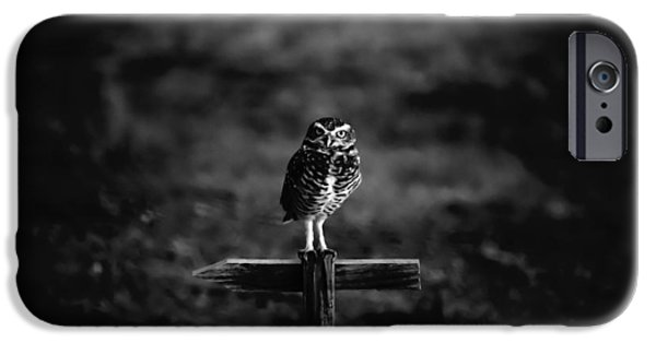 Big Blue Marble iPhone Cases - Burrowing Owl at Dusk iPhone Case by Kelly Gibson