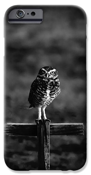 Burrowing Owl at Dusk iPhone Case by Kelly Gibson