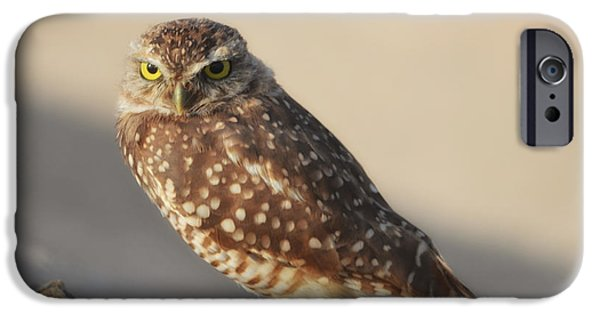Mounds iPhone Cases - Burrowing Owl  iPhone Case by Donna Van Vlack