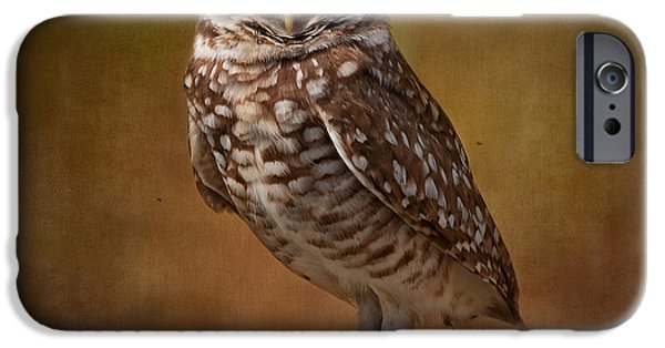 Kim Photographs iPhone Cases - Burrowing Owl Portrait iPhone Case by Kim Hojnacki