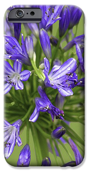Freedom iPhone Cases - Bursting Into Bloom - The Agapanthus Series iPhone Case by Karen Stephenson