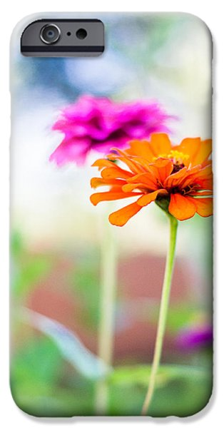 Zinnias iPhone Cases - Bursts of Color iPhone Case by Shelby  Young