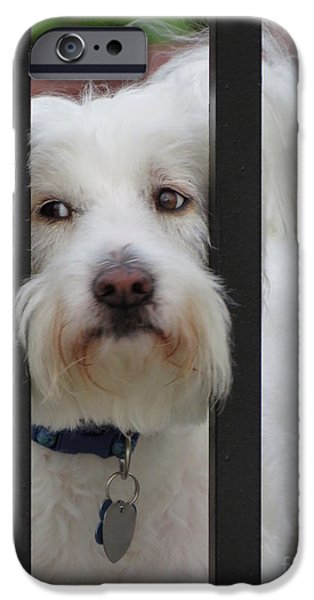 Recently Sold -  - Puppy Digital iPhone Cases - Busted iPhone Case by Ella Kaye Dickey