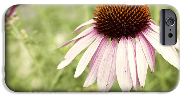 Nectar iPhone Cases - Busy Little Bee iPhone Case by Juli Scalzi