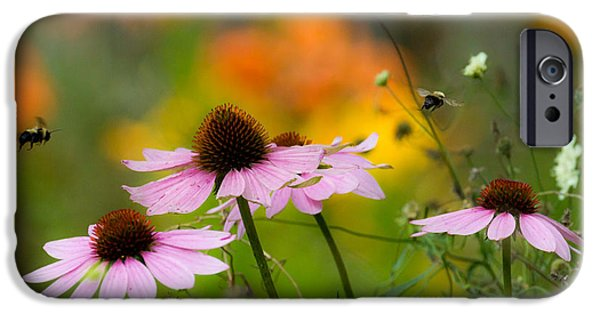 Cone Flower iPhone Cases - Busy Morning iPhone Case by Mary Amerman