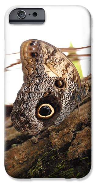 Buterfly iPhone Cases - Buterfly iPhone Case by Liene ART