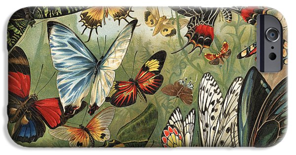 Insects Drawings iPhone Cases - Butterflies 2 iPhone Case by Mutzel