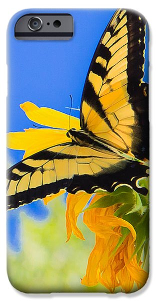Blue Swallowtail iPhone Cases - Butterflies Are Free iPhone Case by Annette Hugen
