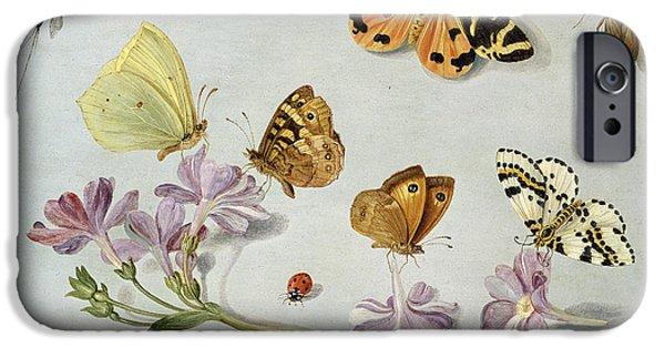 Nature Study iPhone Cases - Butterflies iPhone Case by Jan Van Kessel