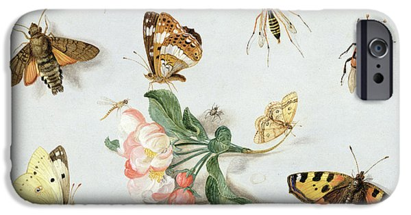 Fauna iPhone Cases - Butterflies moths and other insects with a sprig of apple blossom iPhone Case by Jan Van Kessel
