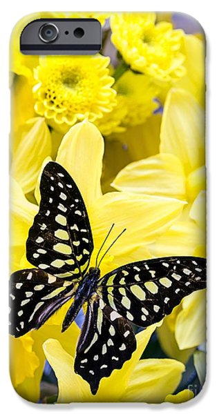 Zinnias iPhone Cases - Butterfly among the daffodils iPhone Case by Edward Fielding