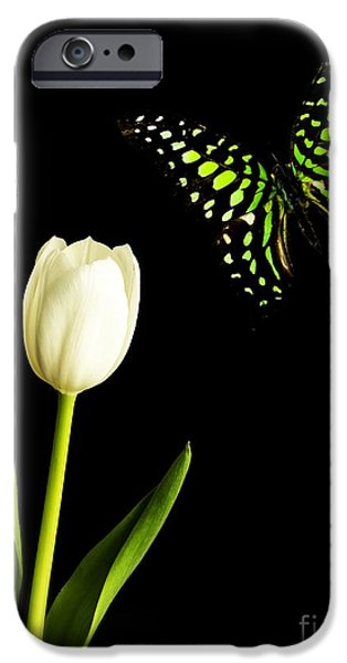 Floral Photographs iPhone Cases - Butterfly and Tulip iPhone Case by Edward Fielding