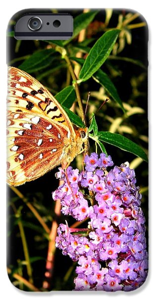 Butterfly Banquet 2 iPhone Case by Will Borden