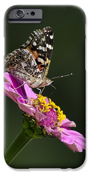 Butterfly Blossom iPhone Case by Christina Rollo