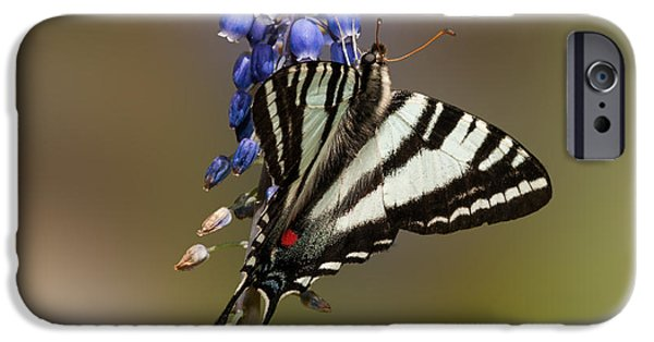 Garden Scene Photographs iPhone Cases - Butterfly Delight iPhone Case by Lara Ellis