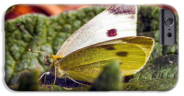 Macro Tapestries - Textiles iPhone Cases - Butterfly iPhone Case by Dennis Bucklin