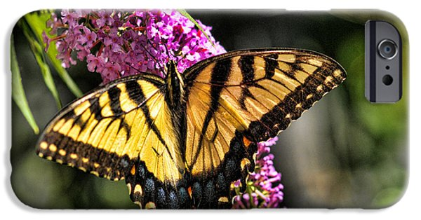 Buterfly iPhone Cases - Butterfly - Eastern Tiger Swallowtail iPhone Case by Paul Ward