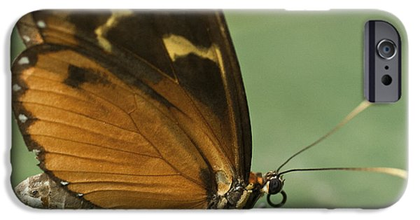 Biologic iPhone Cases - Butterfly Eueides Isabella iPhone Case by Heiko Koehrer-Wagner