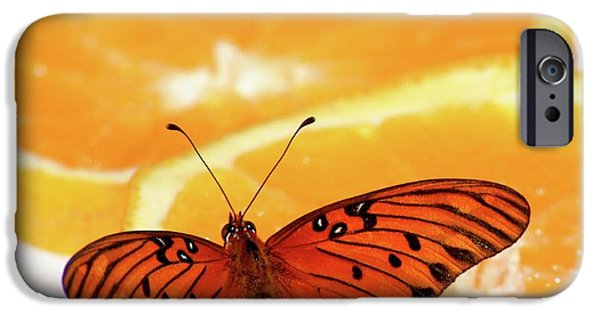 One iPhone Cases - Butterfly Feast iPhone Case by Art Block Collections