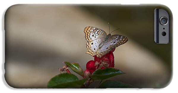 States iPhone Cases - Butterfly House iPhone Case by Joseph Yarbrough