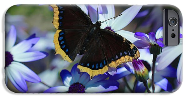 Senetti iPhone Cases - Butterfly In Blue iPhone Case by Heidi Smith